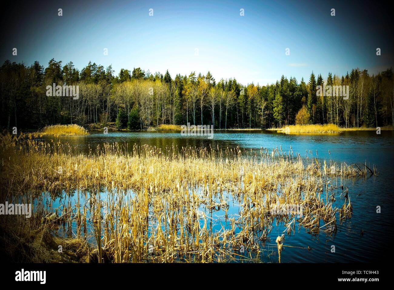 Lake in Sweden. - Stock Image