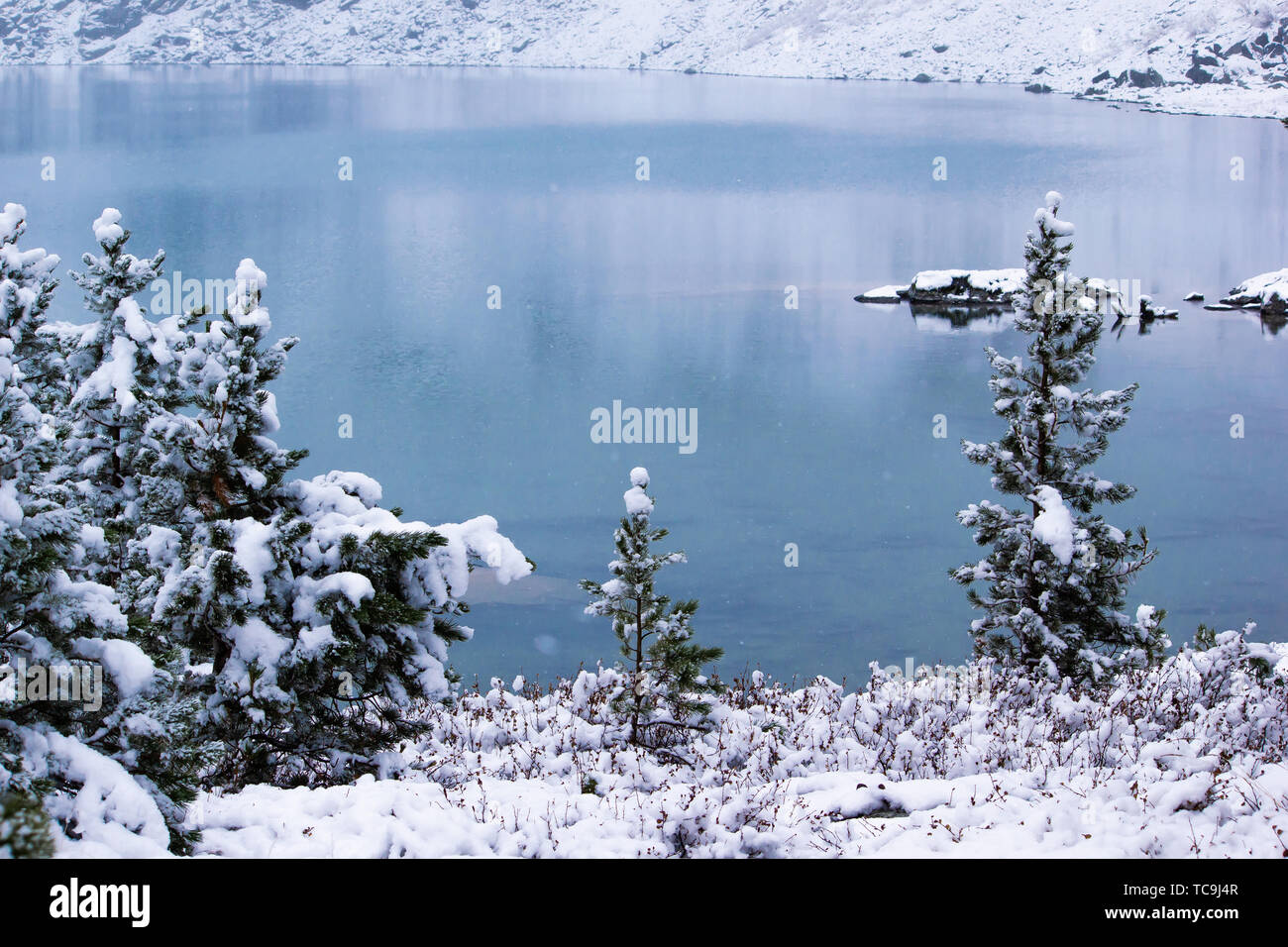 Winter forest on shore of mountain lake. Snow on pines, snowfall Stock Photo