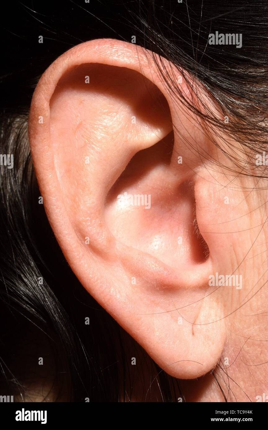 Wrinkles due to age in the ear of a 43-year-old woman. - Stock Image