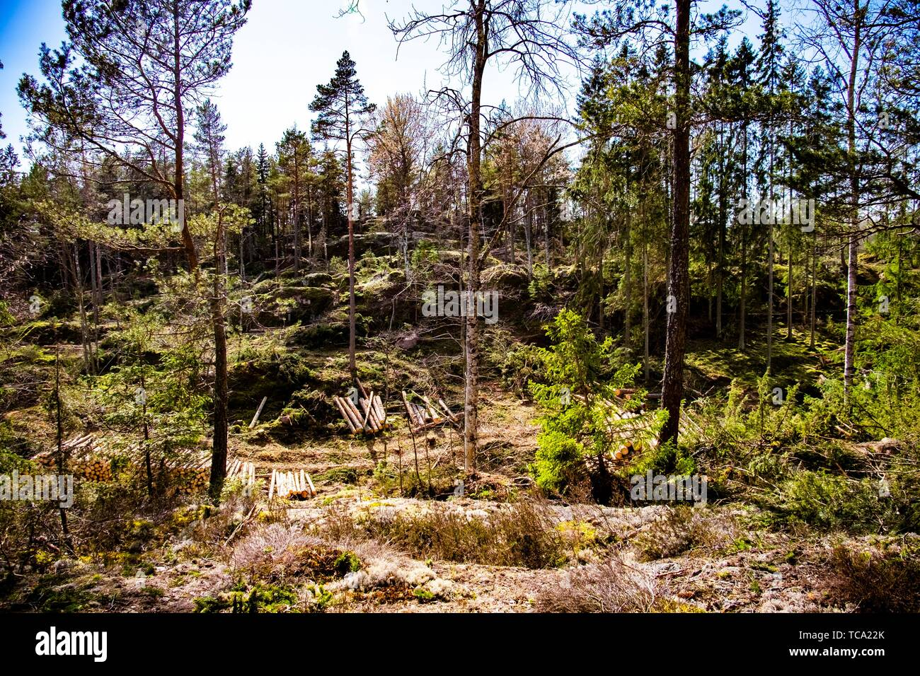 Forest industry in Sweden. - Stock Image