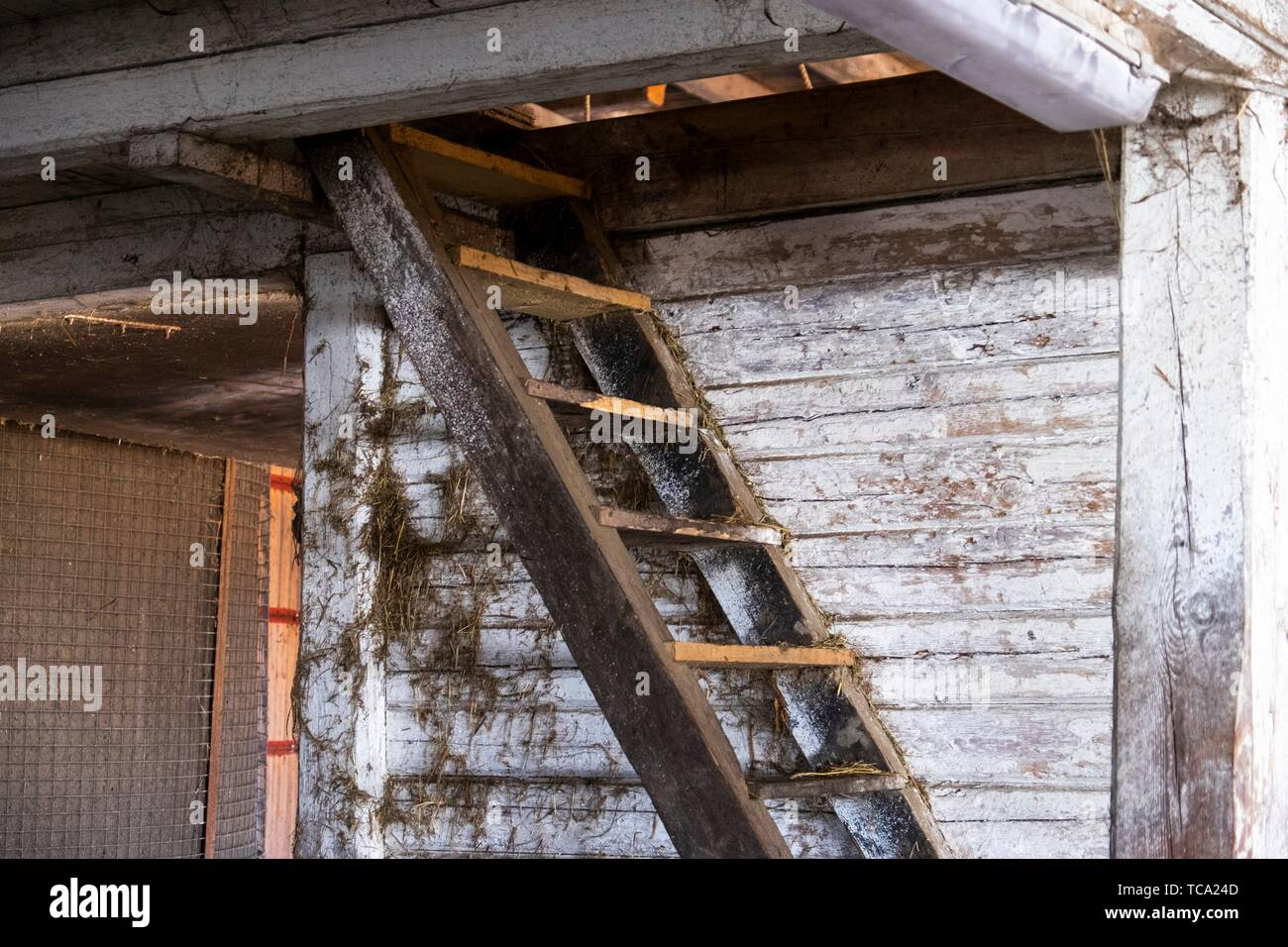 Stairs in a barn in Sweden. - Stock Image