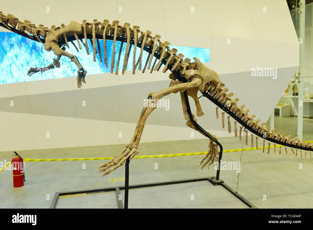 Dinosaur Fossils Stock Photos & Dinosaur Fossils Stock
