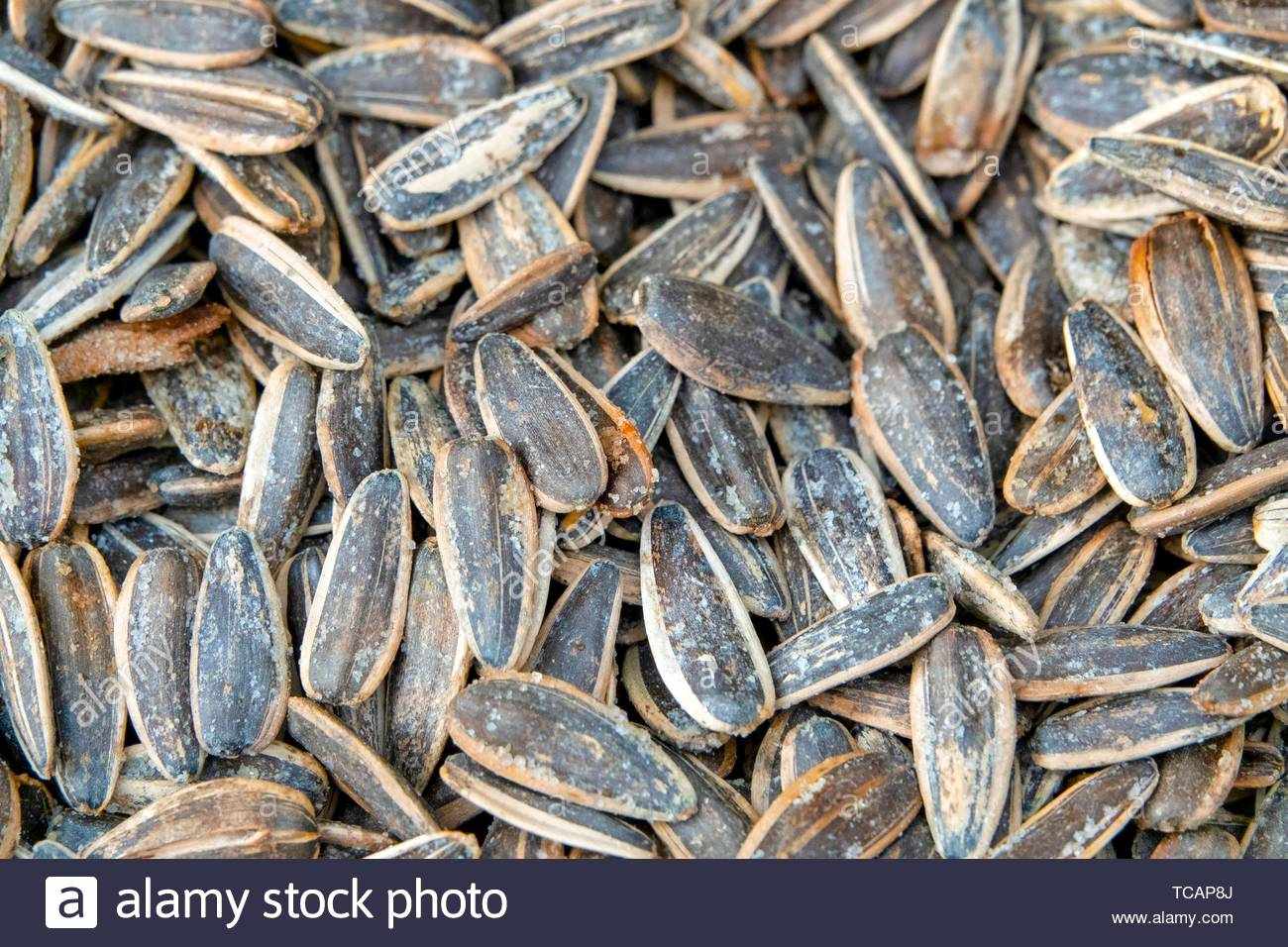 Roasted and salted sunflower seeds. - Stock Image