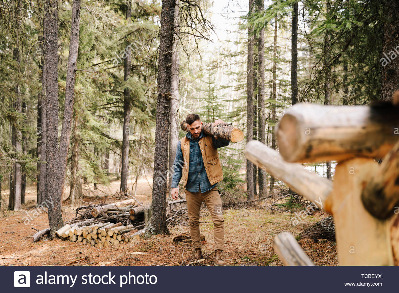 Man carrying tree trunk for firewood in woods - Stock Image