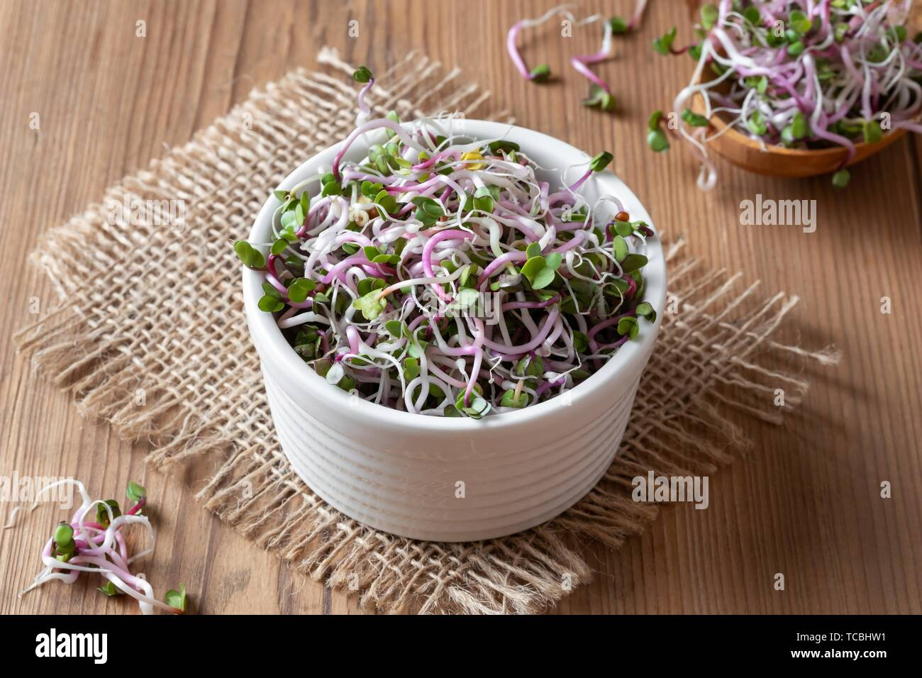 Fresh pink radish sprouts in a bowl. Stock Photo
