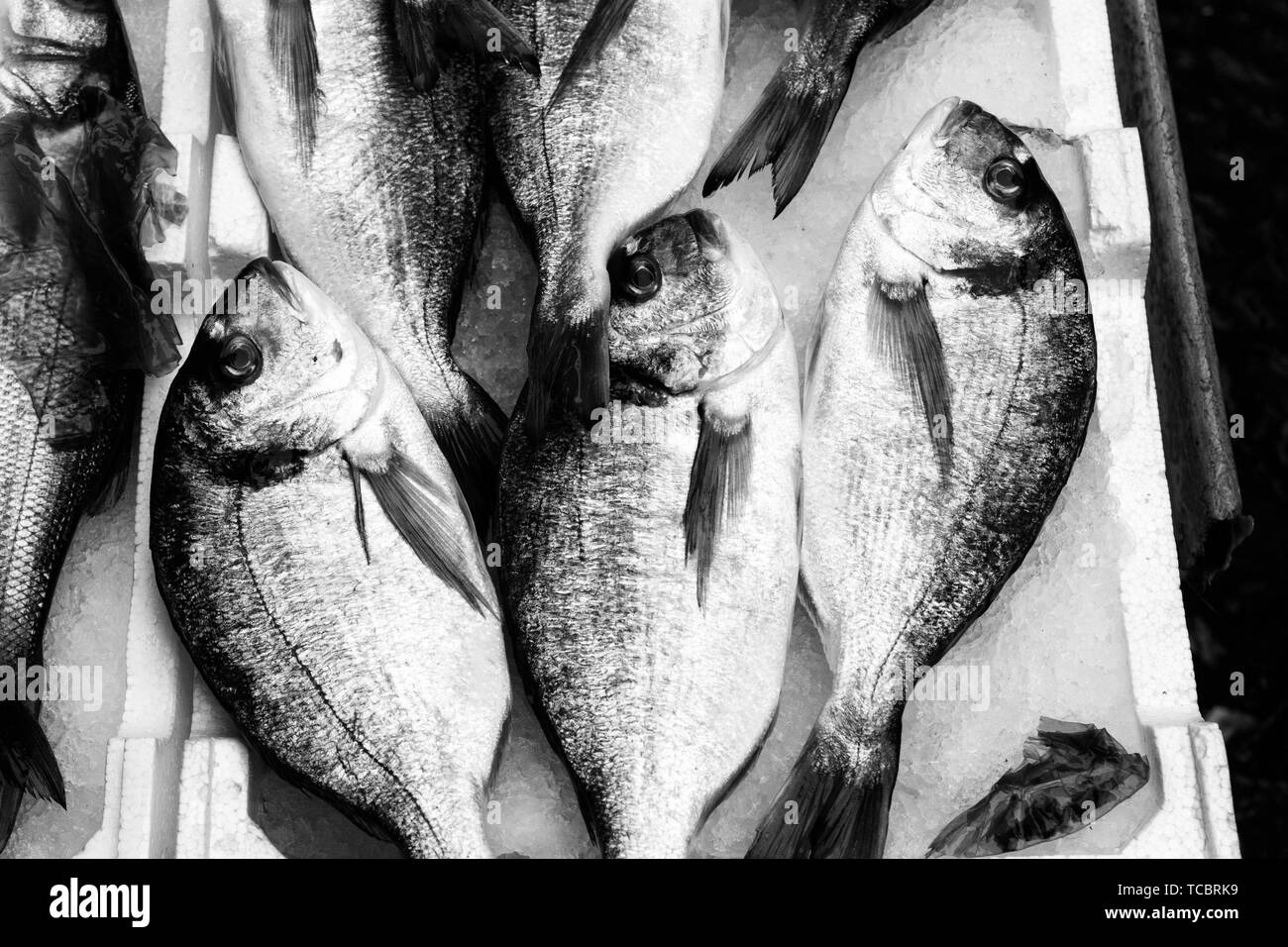 Mediterranean fish exposed. - Stock Image
