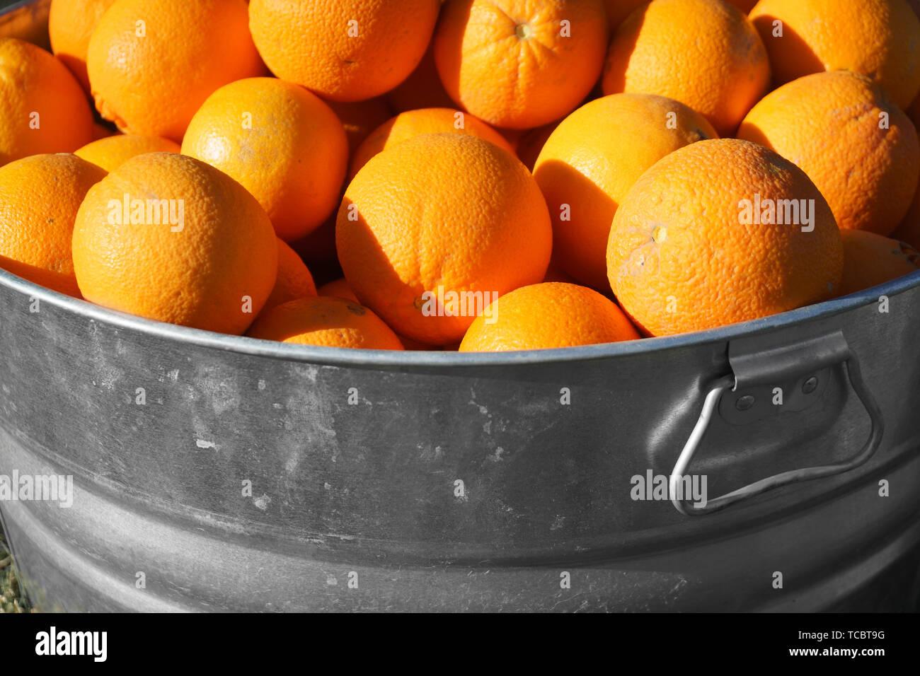 Oranges in Galvanized Metal Tub - Stock Image