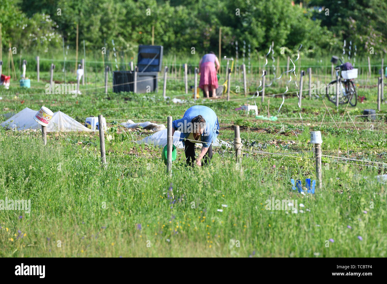 Gronsdorf, Deutschland. 06th June, 2019. Women work in their Schrebergaerten. Hobbygaertner.Kleingarten. | usage worldwide Credit: dpa/Alamy Live News Stock Photo