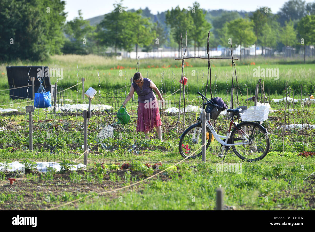 Gronsdorf, Deutschland. 05th June, 2019. Women work in their Schrebergaerten. Hobbygaertner.Kleingarten. | usage worldwide Credit: dpa/Alamy Live News Stock Photo