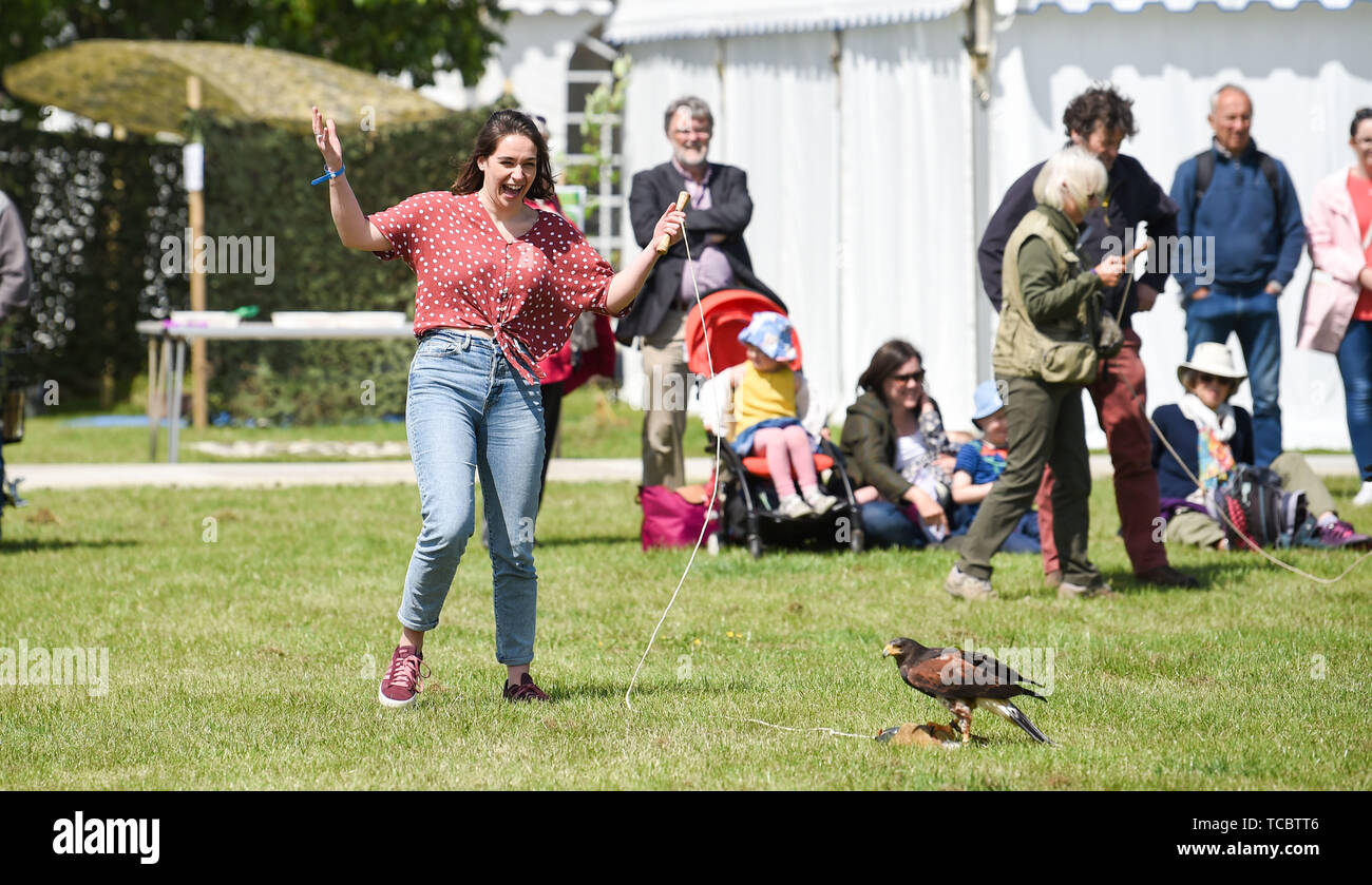 Ardingly Sussex UK 6th June 2019 - A young lady from the audience  tries to help with a falconry display on the first day of the South of England Show held at the Ardingly Showground in Sussex. The annual agricultural show highlights the best in British farming and produce and attracts thousands of visitors over three days . Credit : Simon Dack / Alamy Live News - Stock Image