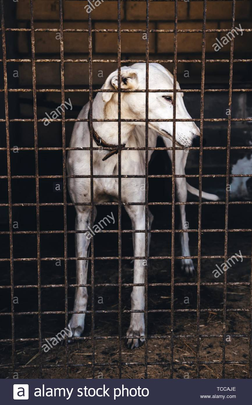 Dogs abandoned and caged, pet detail seeking adoption, grief and sadness. - Stock Image