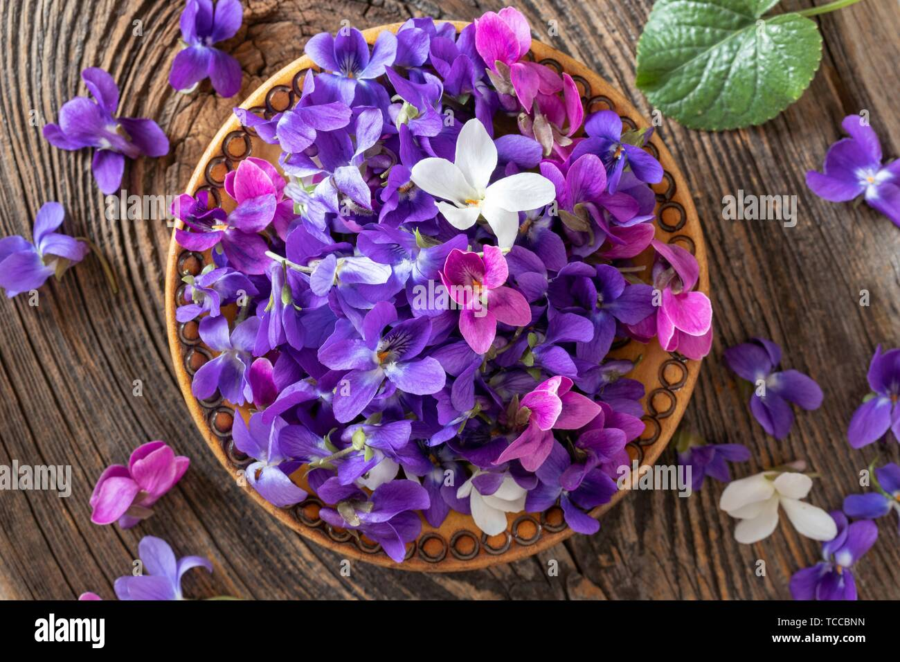 Wood violet flowers in a bowl, top view Stock Photo - Alamy
