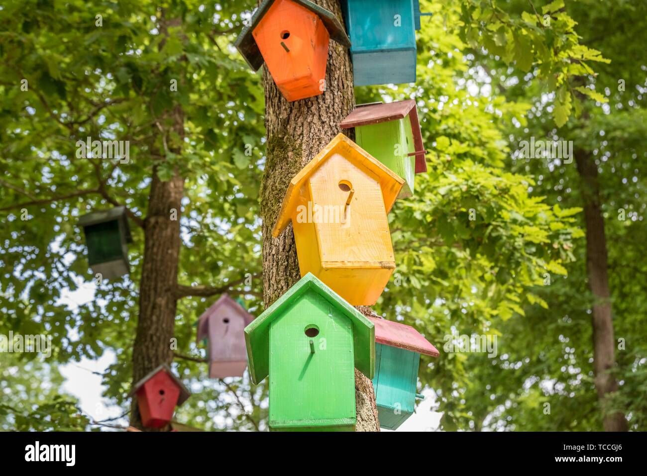Manmade colorful nests hang on tree. Handmade wooden birdhouse on a tree for bird protection. Spring scenery with bird nesting box on a tree. - Stock Image
