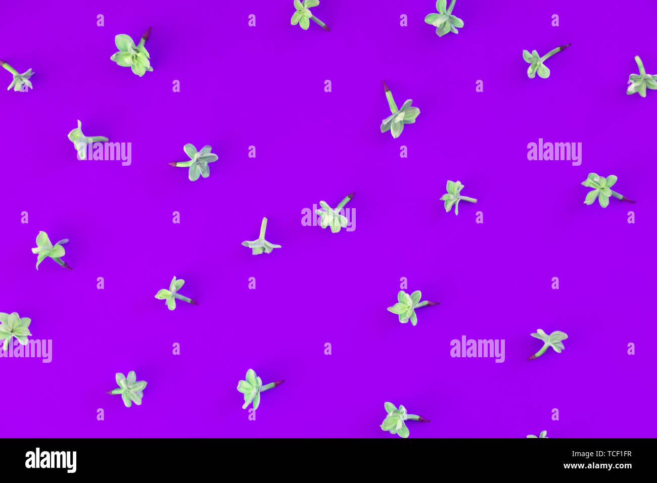 Floral Simple Minimalist Wallpaper Lilac Bloom Isolated Top View
