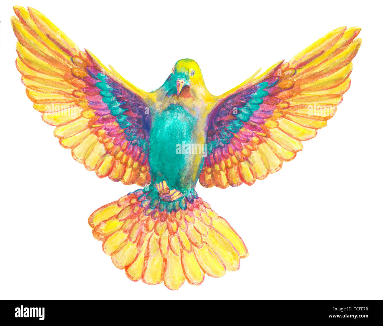 Watercolor and digital watercolor illustration of colorful, bird, pigeon in rainbow colors, symbol of the Holy Spirit, isolated on white background. Stock Photo