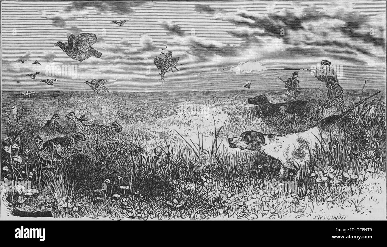 Engraving of the hunters with dogs shooting Praire hens, from the book 'The Pacific tourist' by Henry T. Williams, 1878. Courtesy Internet Archive. () - Stock Image