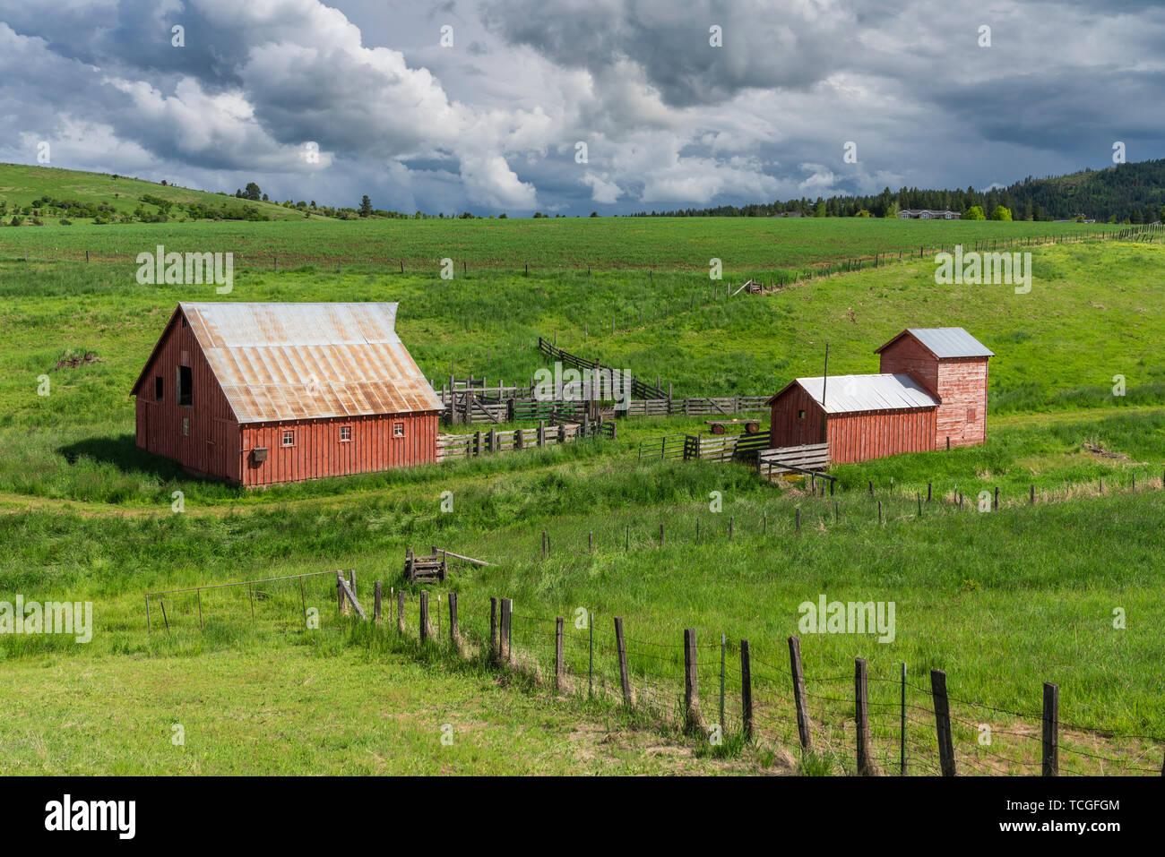 Red farm barns in a valley near Grangeville, Idaho, USA. America. - Stock Image