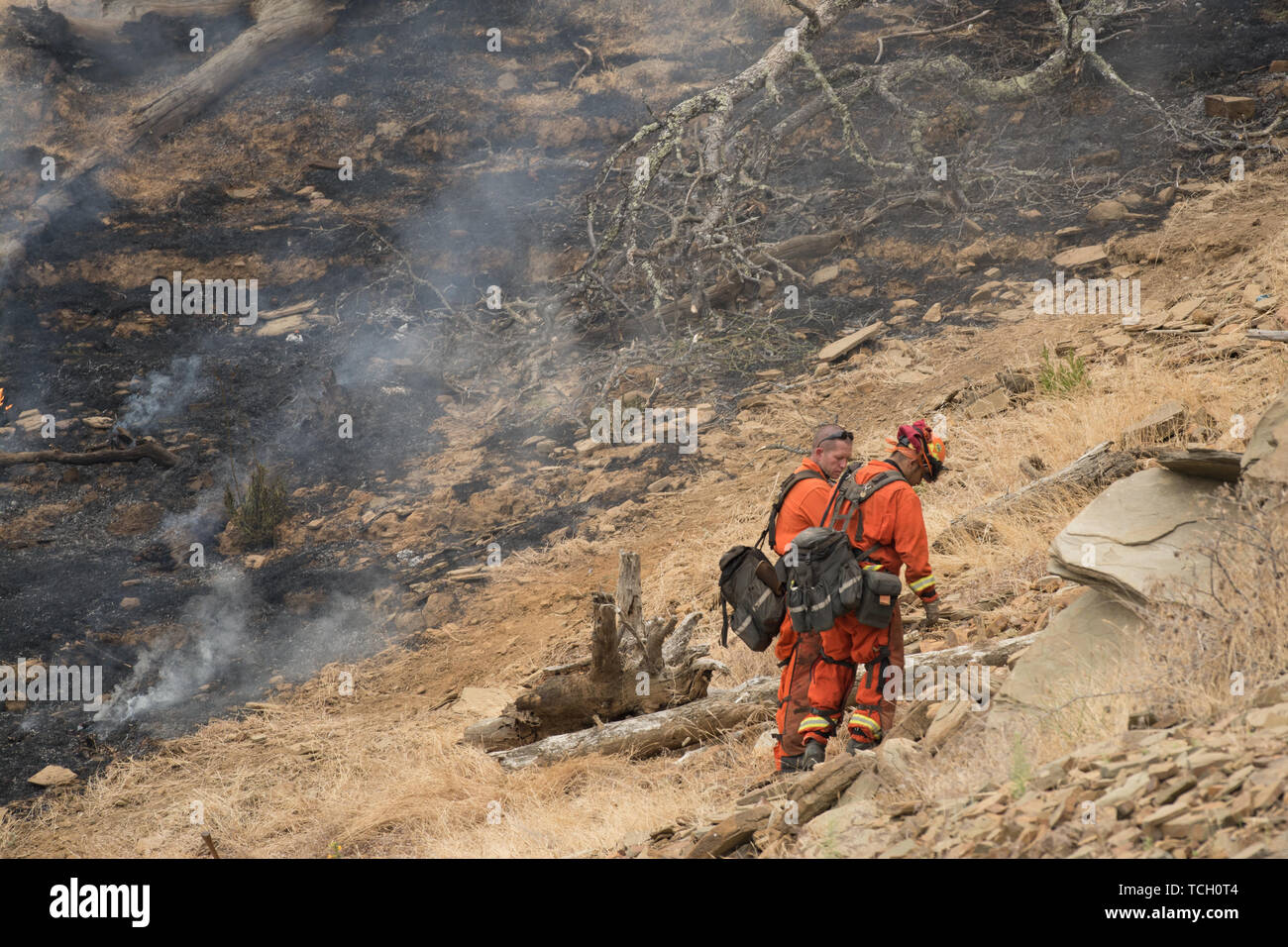 Two cal fire fire fighters stand by a burning hill side in lake berryessa, california, usa - Stock Image
