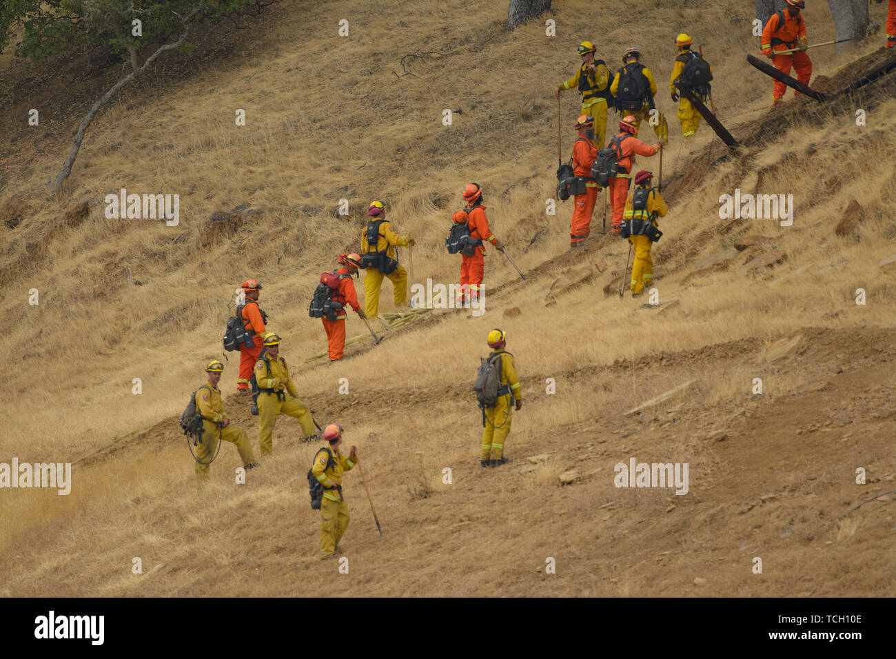 Cal fire fire fighters line up to climb a grassland hill side in lake berryessa, california, usa. - Stock Image