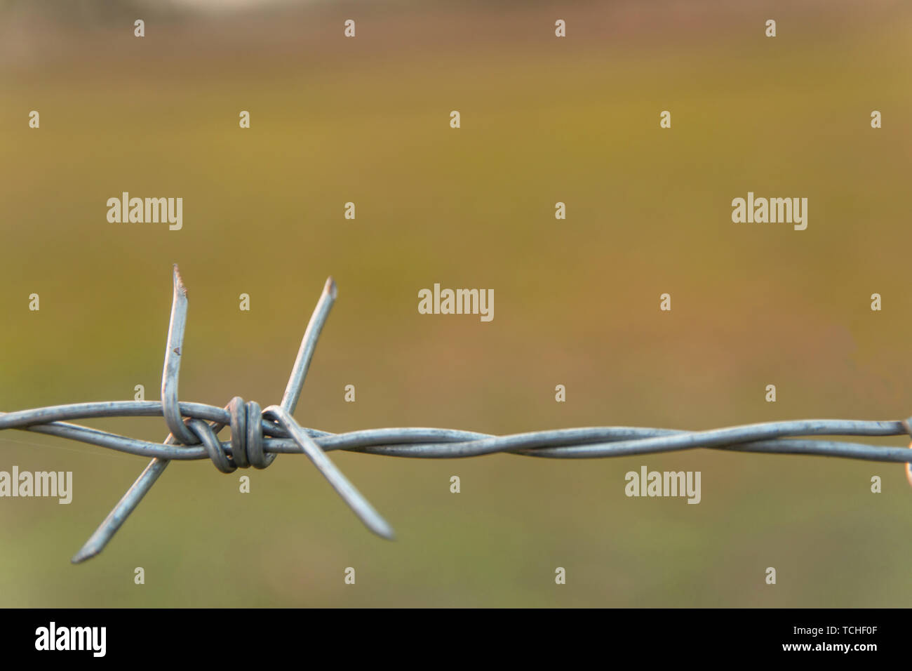 Barbed wire with blur nature background with copy space Stock Photo