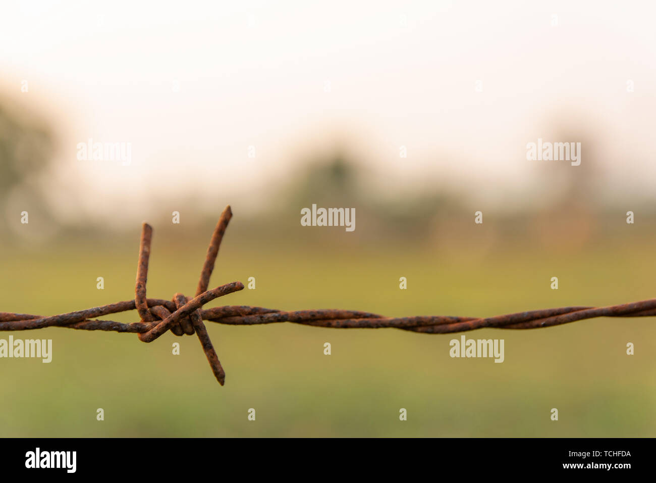 Barbed wire with blur nature background with copy space - Stock Image