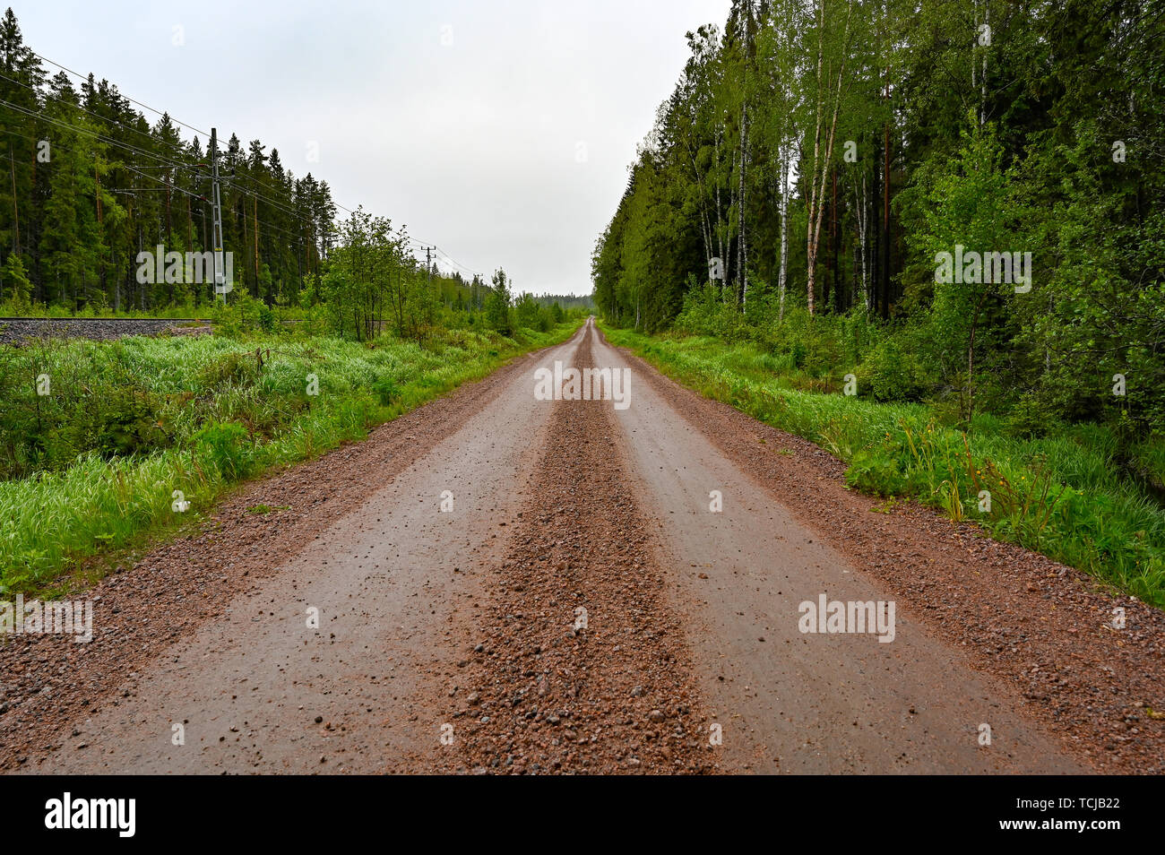 Straight gravel road through swedish forest in may 2019 - Stock Image