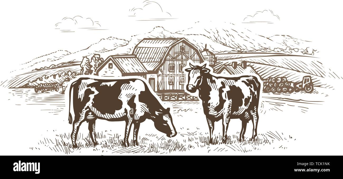 Dairy farm. Cows graze in the meadow. Rural landscape, village vintage sketch - Stock Image