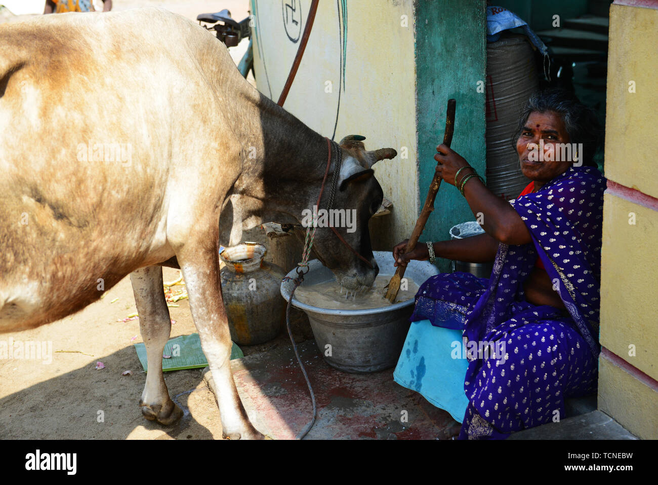 Tamil Woman Stock Photos & Tamil Woman Stock Images - Alamy