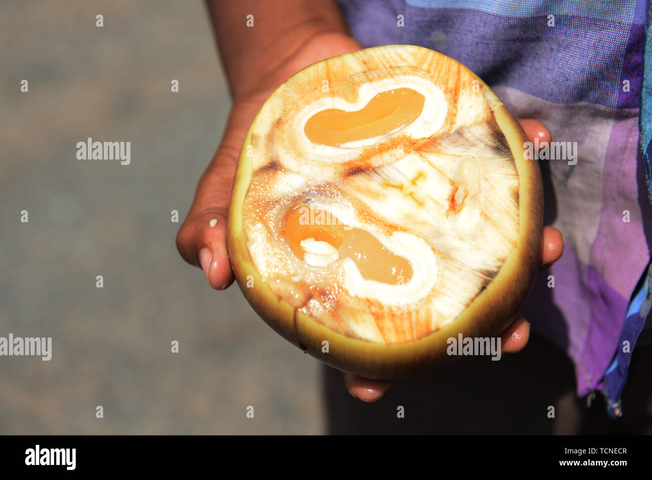 A Tamil boy holding an opened Palmyra fruit. - Stock Image