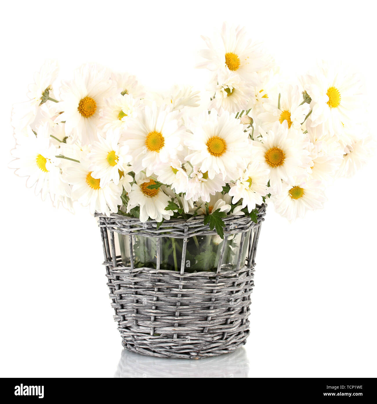 daisies in vase isolated on white - Stock Image