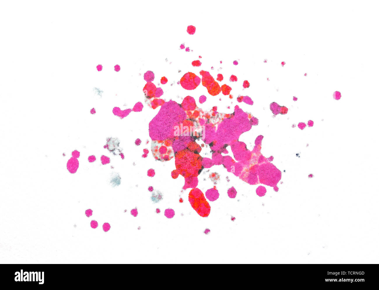 Splatter paint isolated on white background made with punchy magenta and red colours - Stock Image