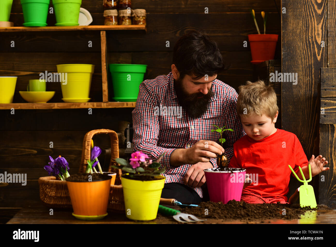 bearded man and little boy child love nature. happy gardeners with spring flowers. Flower care watering. Soil fertilizers. Family day. Greenhouse. Fat - Stock Image