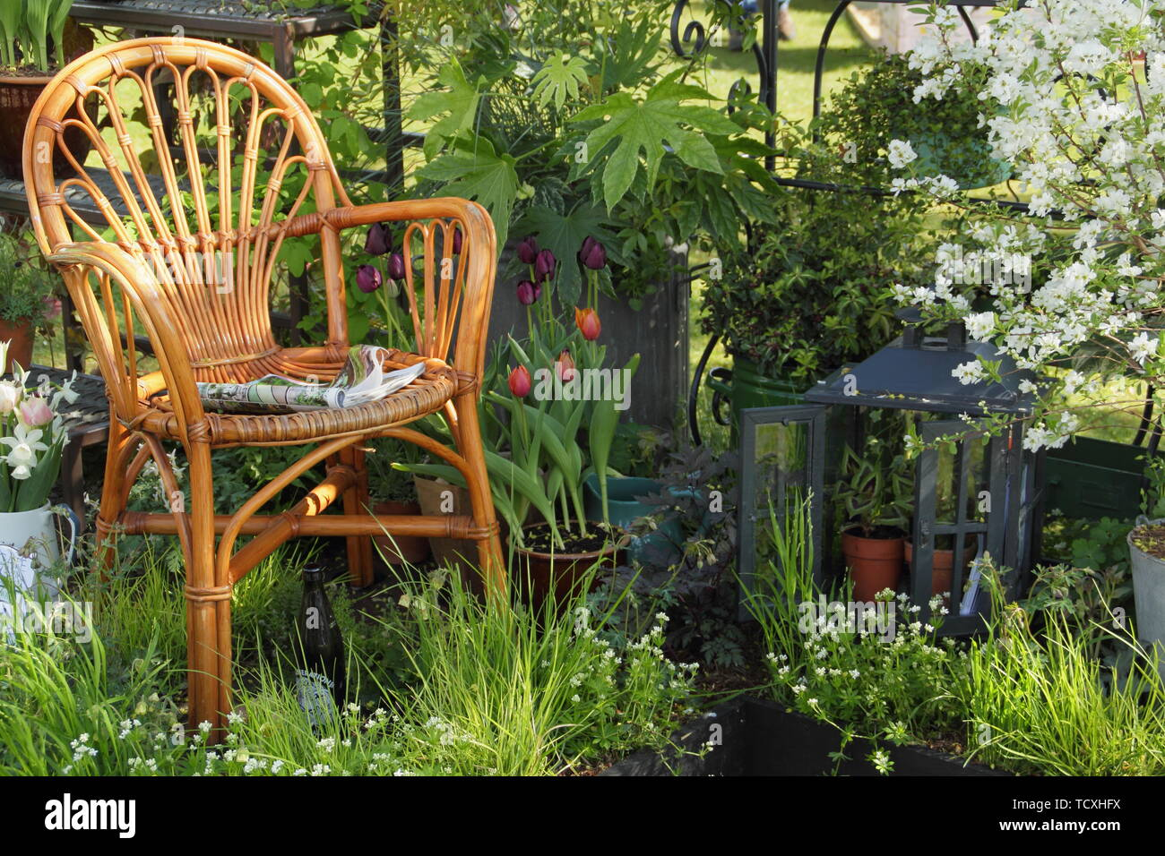 Small urban green space with cosy seating and Aquilegia 'Clementine White', Rosa banksiae, fatsia, grasses, ivy, exochorda and Malus 'Freya' Stock Photo