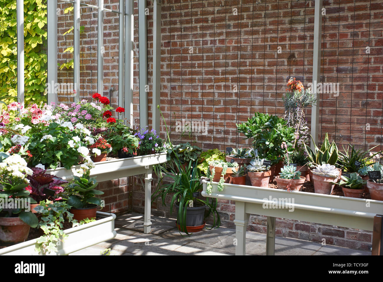 A greenhouse full of summer flowering plants in the bright sunshine at Holehird Gardens, Windermere, Cumbria, UK, GB - Stock Image