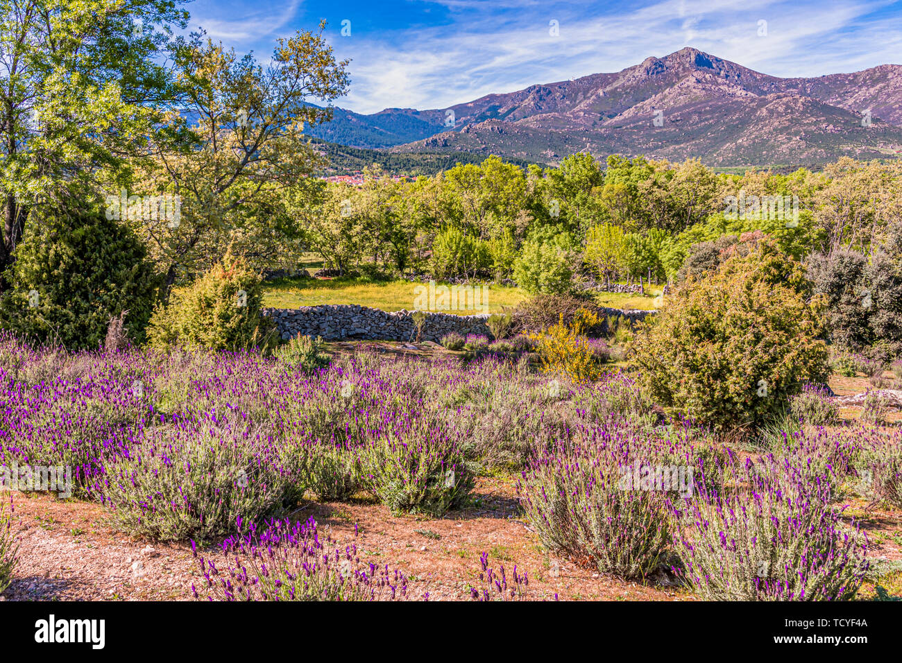 fields and sierra of guadarrama one spring morning. madrid Spain. Stock Photo