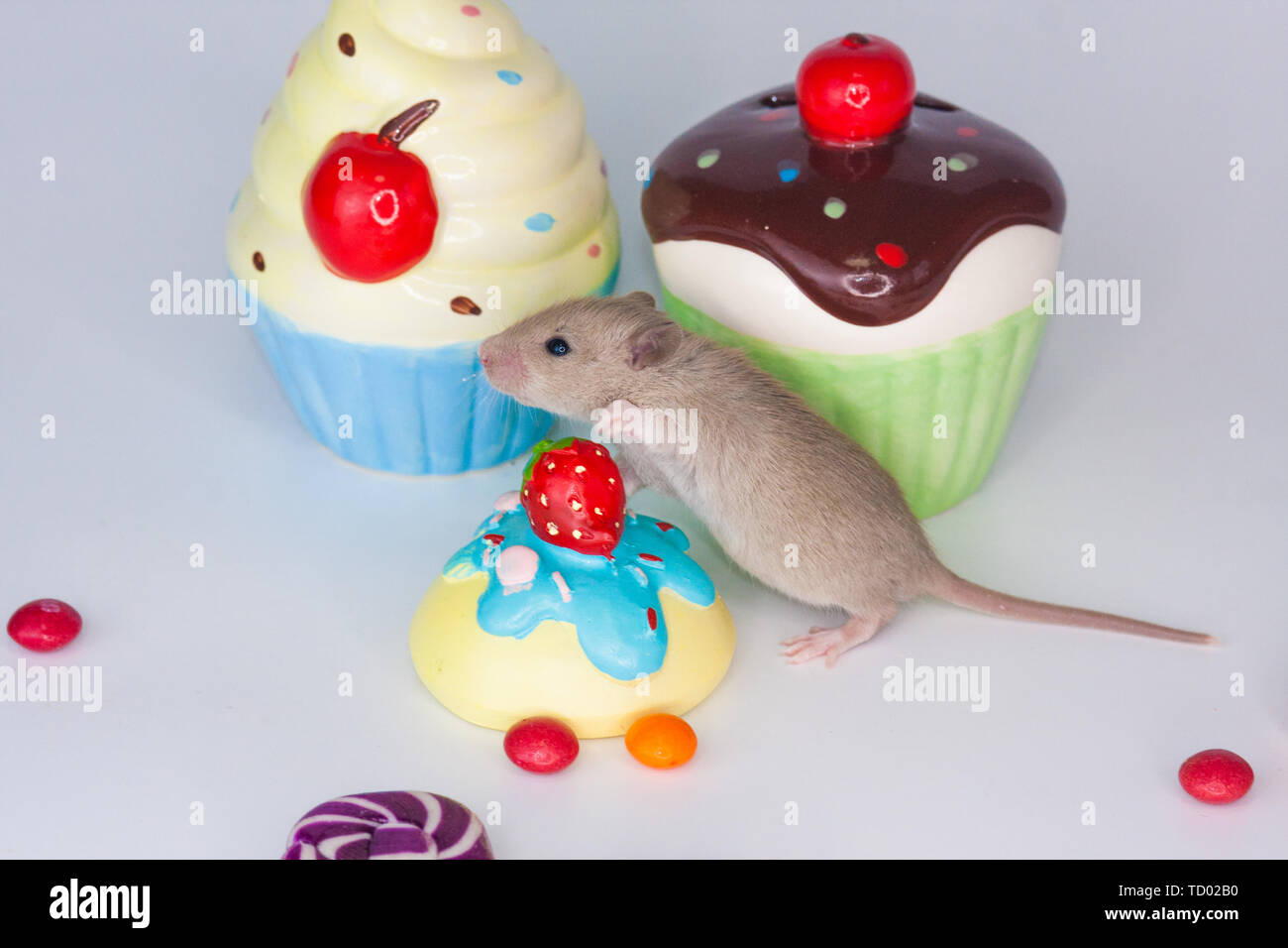 The concept of dessert. Rat on the background of colorful sweets. Mouse with bright candies and cupcakes. Decorative rodent closeup. - Stock Image