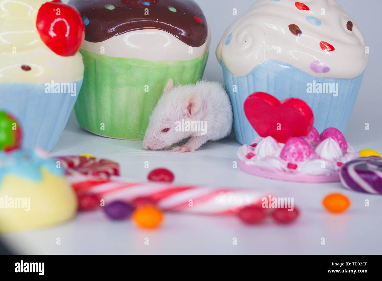 The concept of a children's holiday. Little mouse with colorful sweets. Rat on the background of cupcakes and candy. - Stock Image