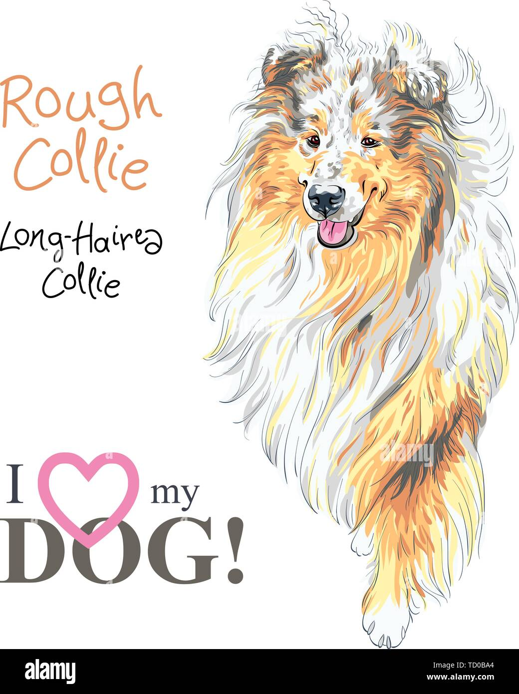 dog Rough Collie breed vector Stock Vector