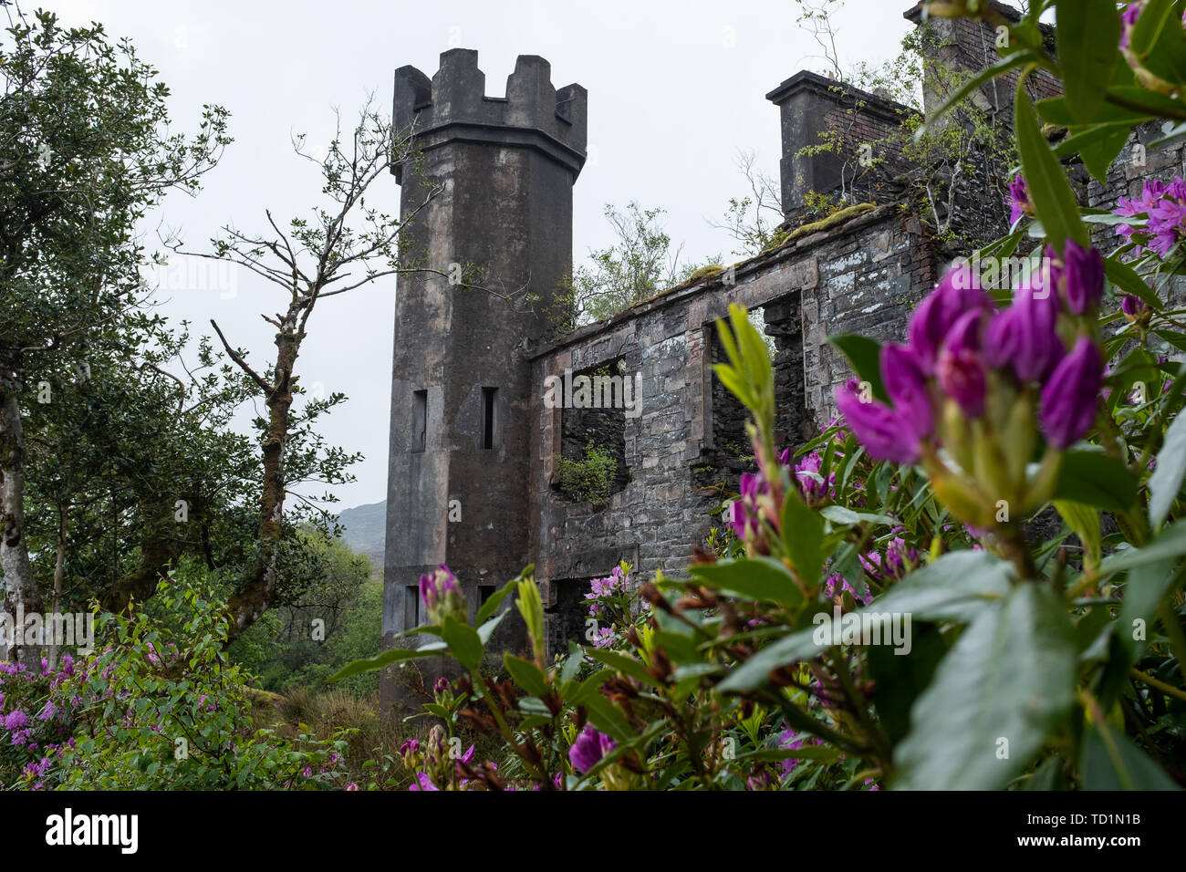 The desolate ruins of a large house or small castle on the road just passed Molls Gap on the Ring of Kerry, Ireland on an overcast day - Stock Image