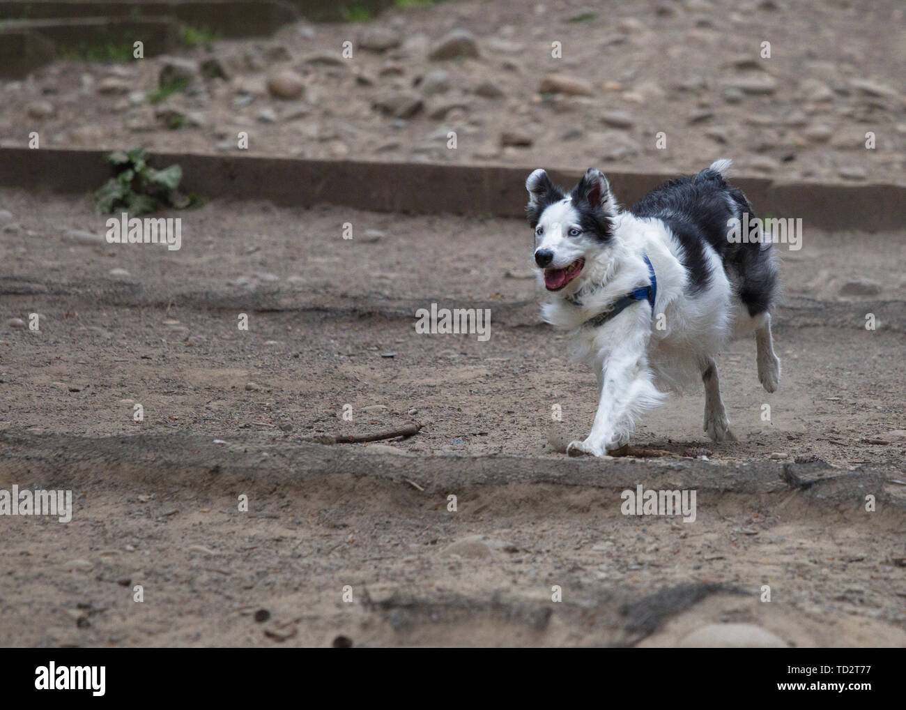 Multiple Types Of Pet Dogs Stock Photo Alamy
