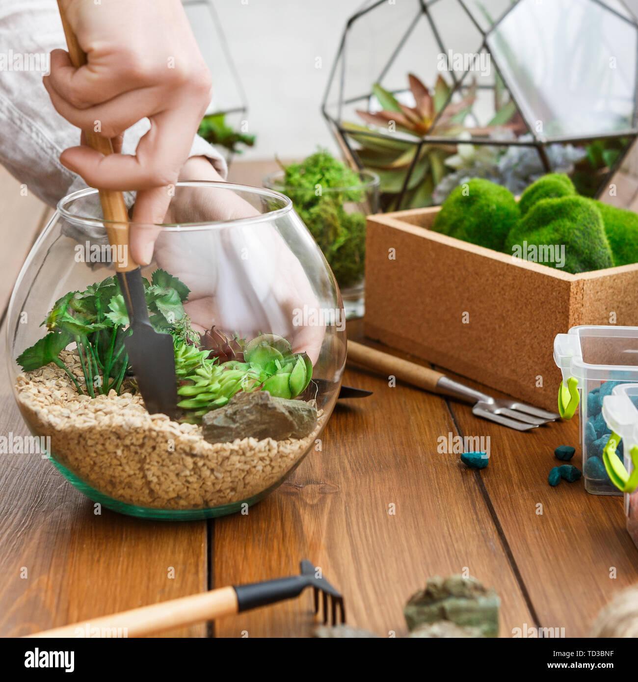 Woman transplanting plants in florarium. Mini gardening concept Stock Photo
