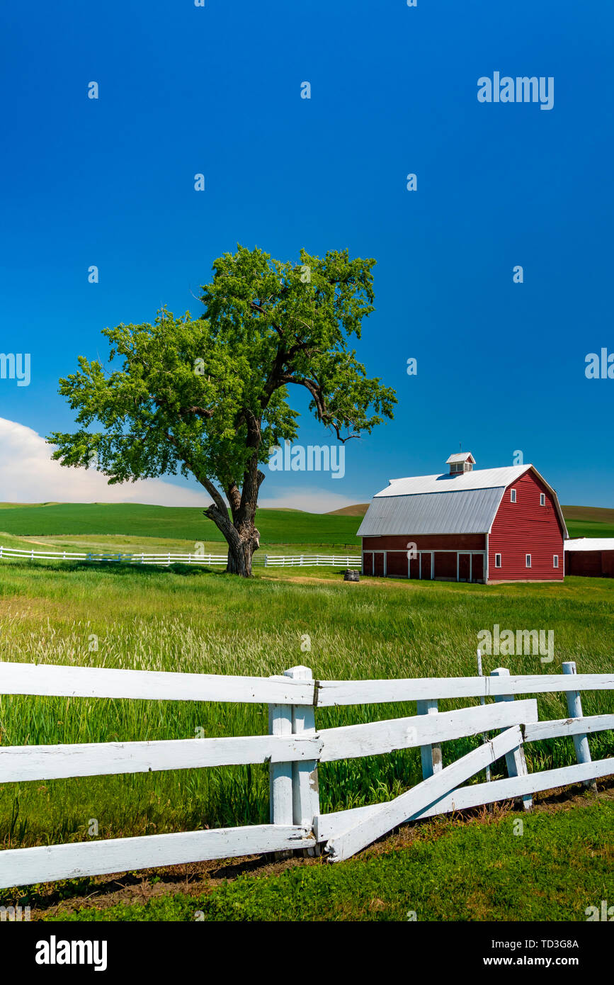 A red barn in the rolling hills of the Palouse region of Washington, USA. - Stock Image