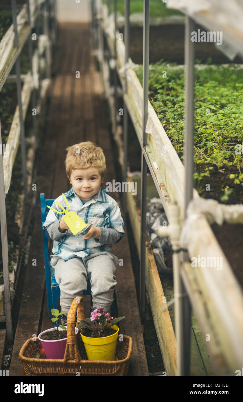 working in greenhouse. small boy farmer working in greenhouse. working in greenhouse is my hobby. future expert working in greenhouse with plants - Stock Image