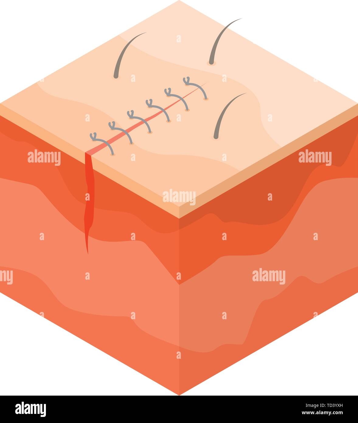 Medical surgical suture icon, isometric style - Stock Image