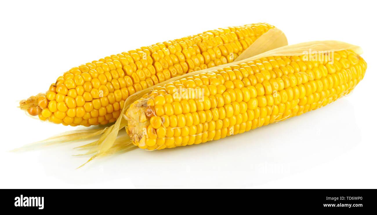 Boiled corn isolated on white - Stock Image
