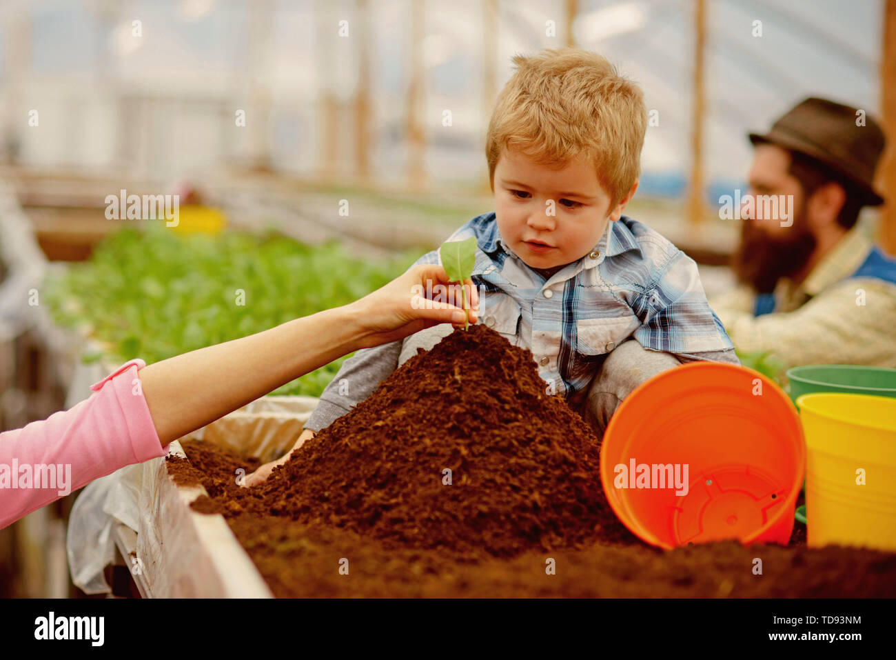 family values. family in greenhouse. happy family values. family values concept. values and trust - Stock Image