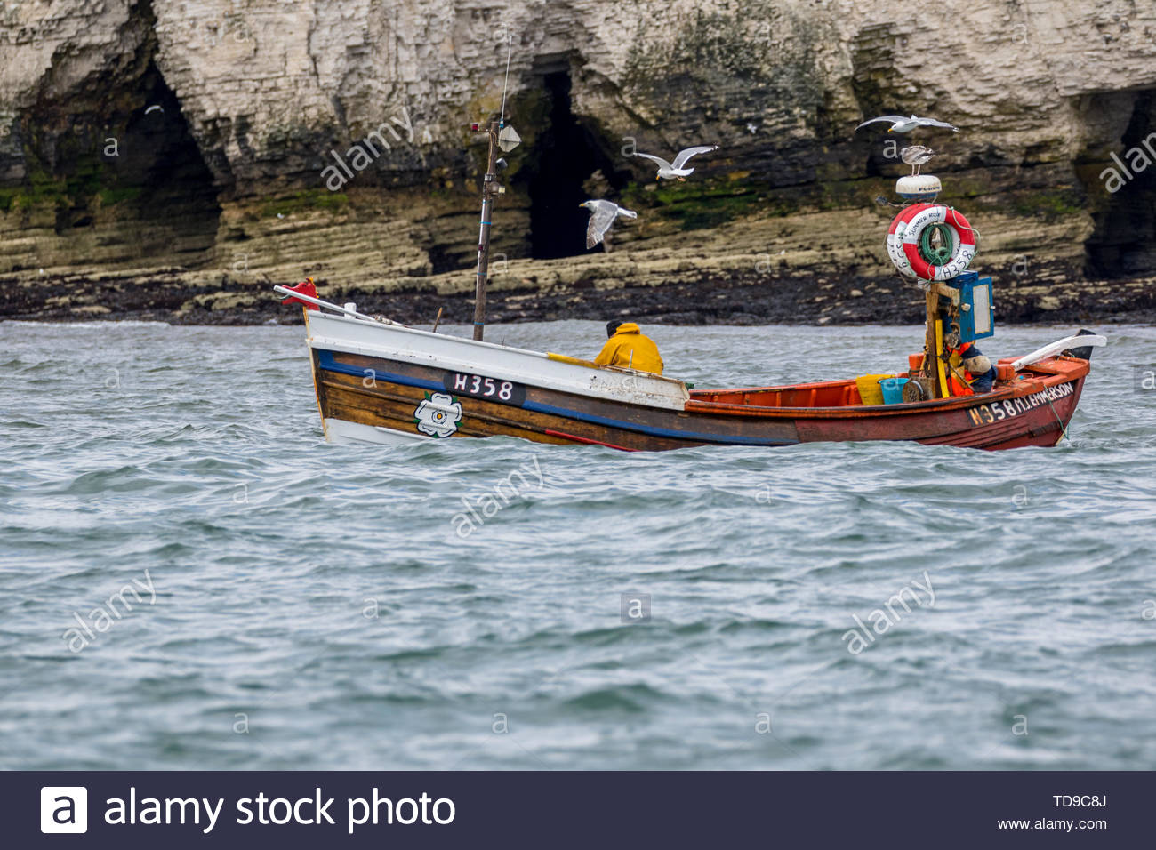 A traditional Yorkshire Coble, launched from North Landing makes way along the south side of Flanborough Head followed by Herring Gulls. - Stock Image