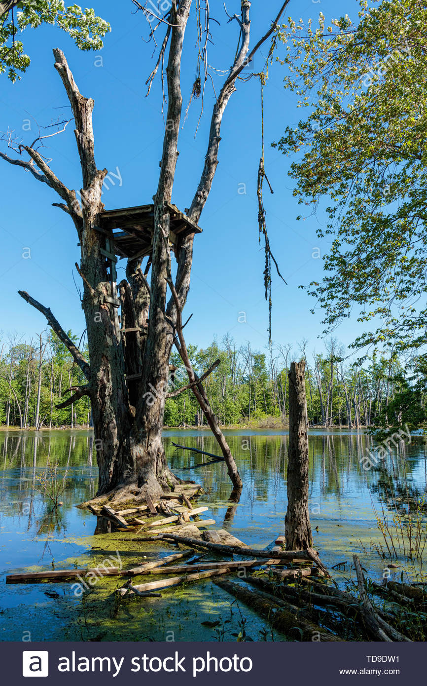 Rickety unsafe observation platform in tree in Rouge National Urban Park in Pickering Ontario Canada. - Stock Image