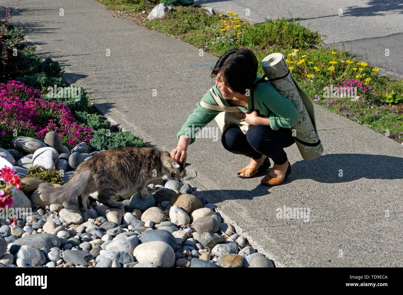 Young Asian woman squatting on the sidewalk and petting a cat, Vancouver, BC, Canada - Stock Image