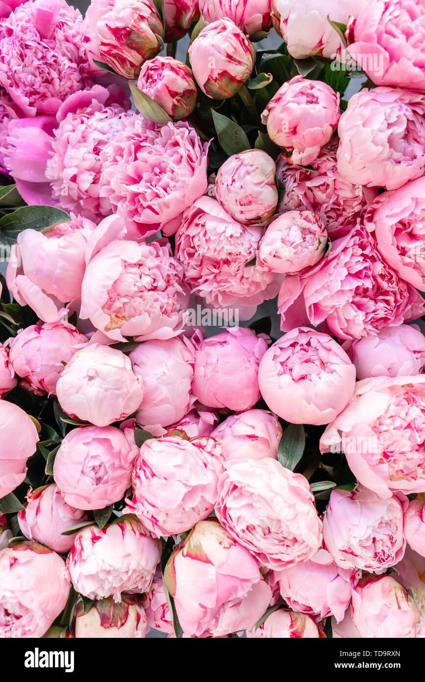 Floral Carpet Or Wallpaper Background Of Pink Peonies